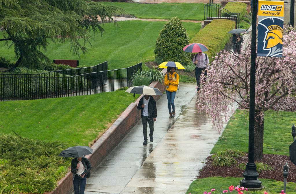 Students walk in the rain with umbrellas along College Avenue with green grass on one side and a flowering pink tree on the other.